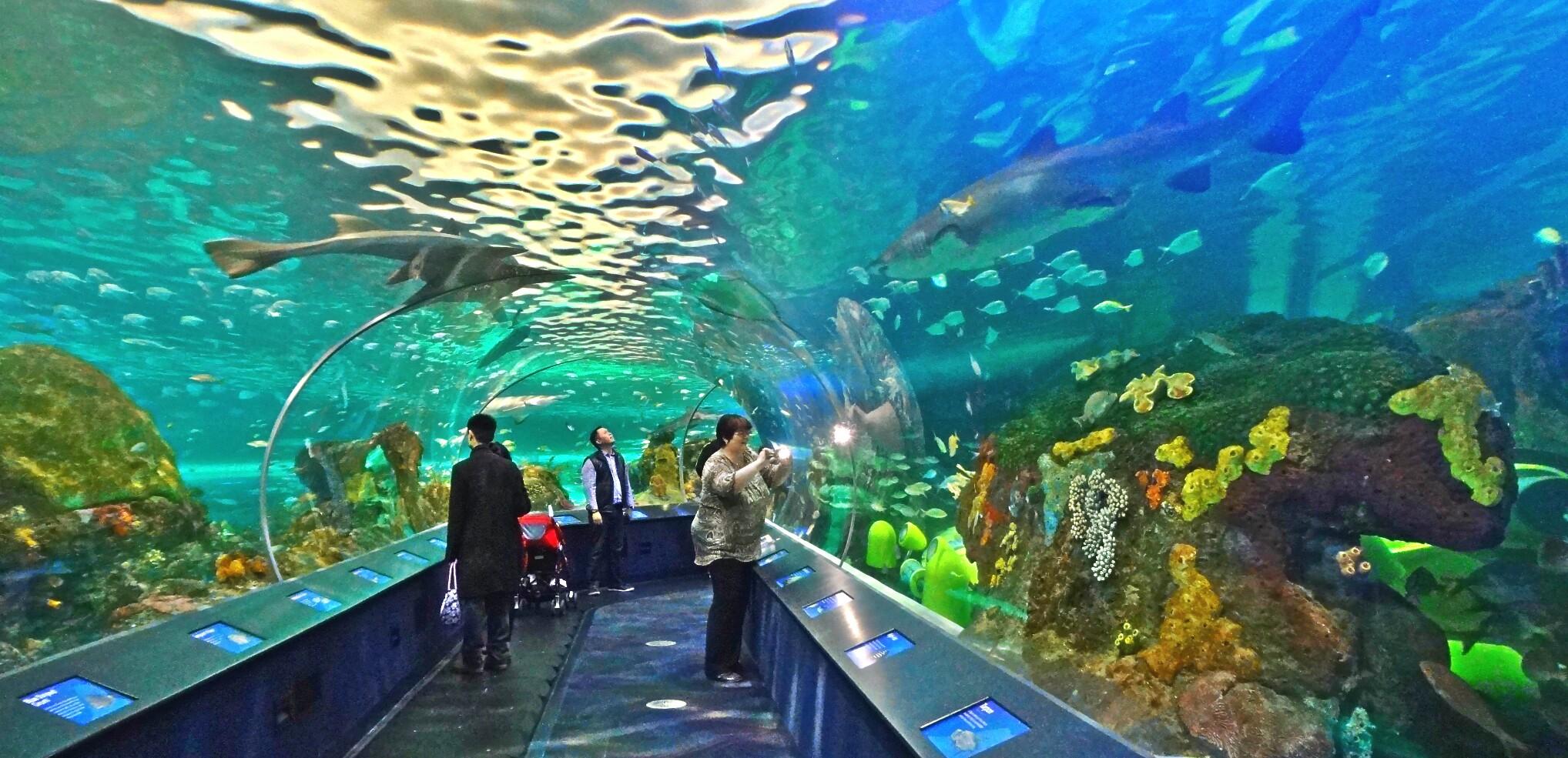 Image Result For Great Lakes Aquarium