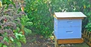 Bailey Beehive