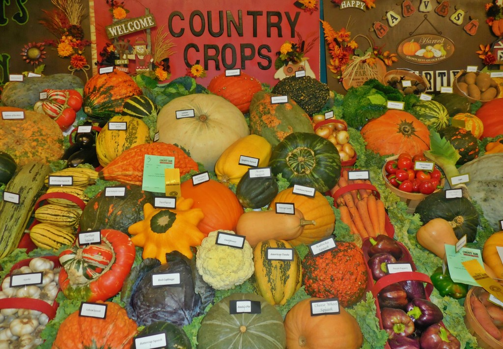 Squash Display, Norfolk County Fair