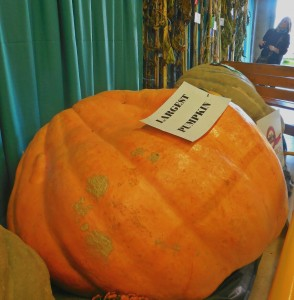 Largest Pumpkin, Norfolk County Fair